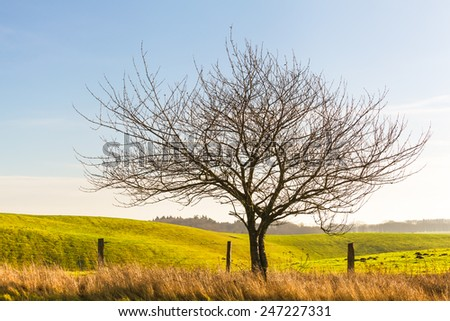 Bare tree without leaves at a sunny day near fenced hilly grassland/Single Tree at Field Border - stock photo