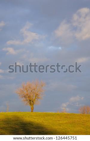 Bare trees against dark sky in morning light - stock photo