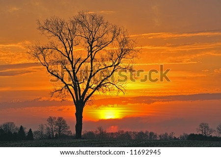 Bare trees in a rural landscape at sunrise, Michigan, USA