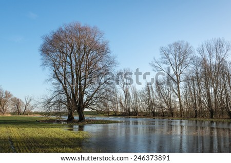 Bare trees in earty morning light in a Dutch nature reserve with a high water level. It is winter and a thin layer of ice is on the water. - stock photo