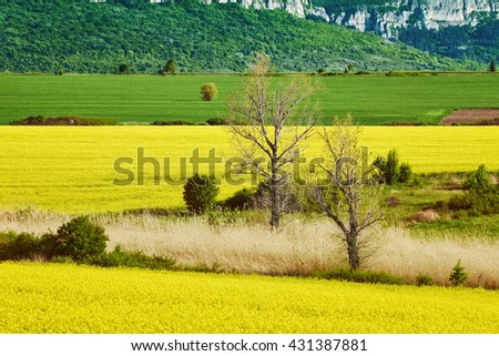 Bare Trees in the Rapeseed Field - stock photo