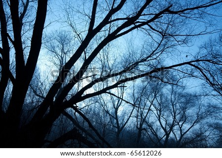 Bare trees of a forest in winter, silhouettes against evening sky - stock photo
