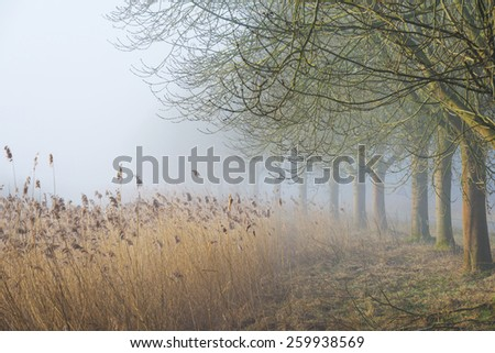 Bare trees under a foggy sky in winter - stock photo