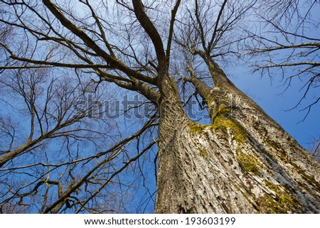 Bare trees under blue sky - stock photo