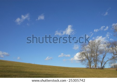Bare trees under blue sky with white clouds in field. - stock photo