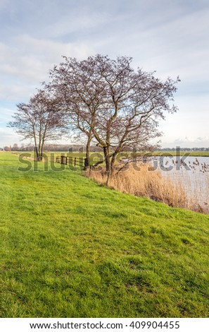 Bare trees with strangely shaped branches on the shore of a creek in a Dutch nature reserve at the end of the winter season. - stock photo