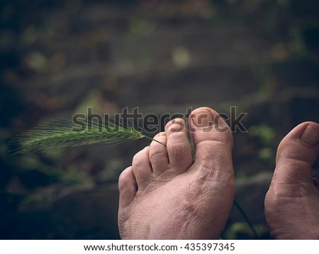Barefoot feet with ear of corn between toes - stock photo