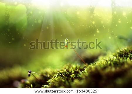 Bark and moss - stock photo