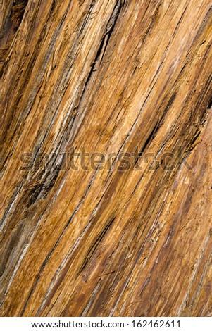 Bark Background - stock photo