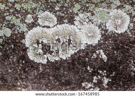 bark fungus texture - stock photo