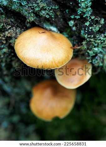 Bark mushrooms on tree - stock photo