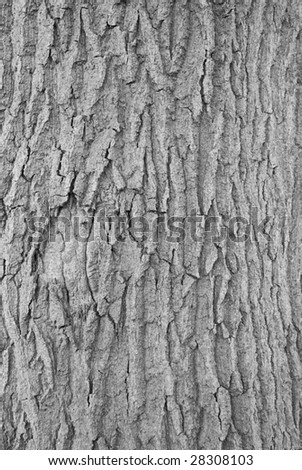 bark of a tree