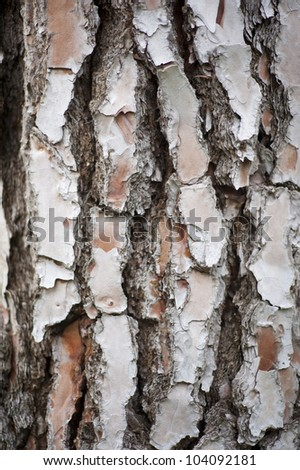 bark of a tree, usable as background - stock photo
