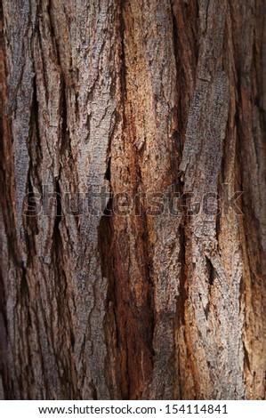 Bark of acacia tree texture with sunshine - stock photo