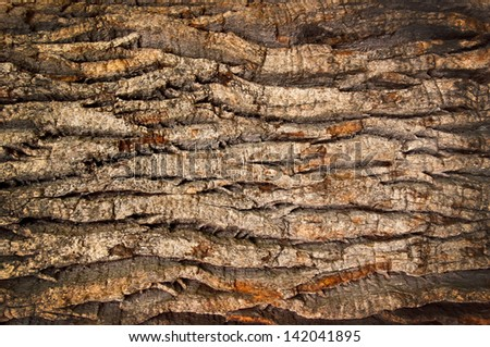 bark of an old oak - stock photo