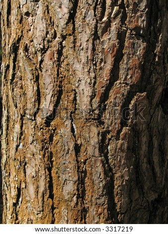 Bark of an old Tree.