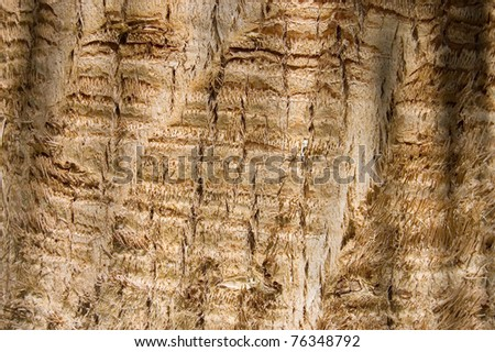 Bark of an old tree as background - stock photo