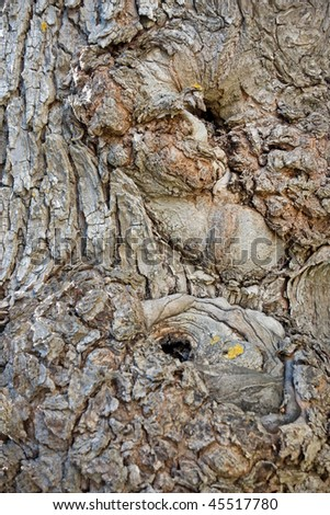 Bark of ancient worn tree with rust fungus - stock photo