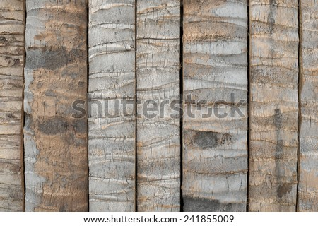 Bark of Coconut tree for background - stock photo