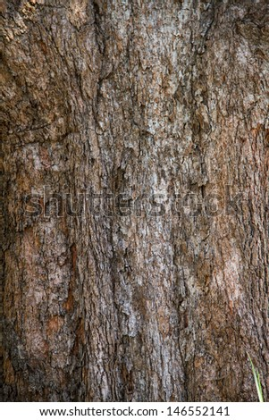 Bark of Irvingia malayana tree, tropical tree in the northeast of thailand - stock photo