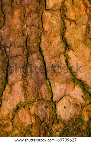 bark of old pine tree in sunlight - stock photo