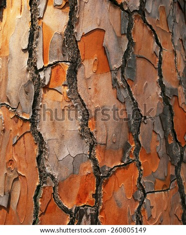 Bark of Pine Tree. Background - stock photo