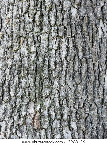 Bark of the oak tree as textured background - stock photo