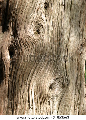 Bark of tree - stock photo