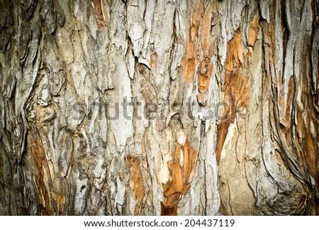 Bark of Tree background - stock photo