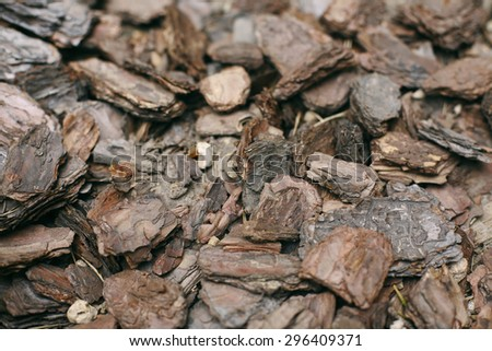 Bark of Tree background - stock photo