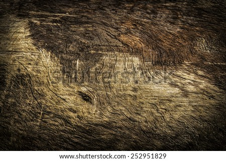 bark of tree background and texture - stock photo