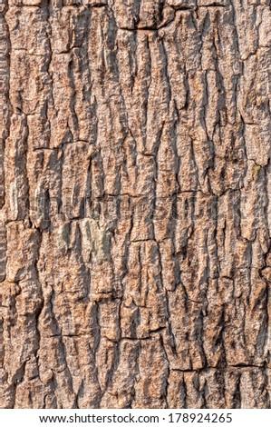 Bark of tree. Seamless Tileable Texture. - stock photo