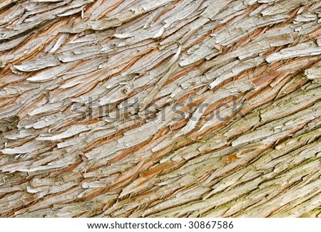 Taxodium Distichum Bark
