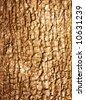 Bark of tree - texture - stock photo