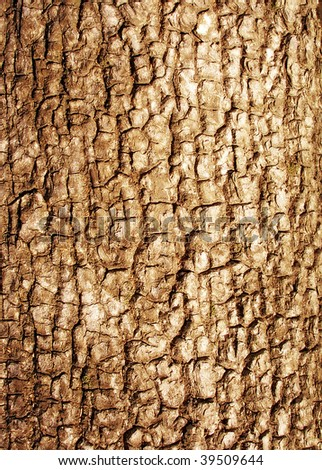 Bark of tree - texture - stock photo