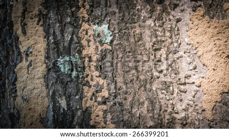 bark of tree texture, black border - stock photo
