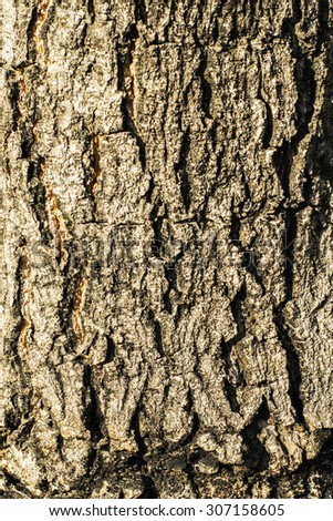 bark of tree texture in the park - stock photo