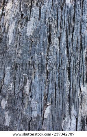 bark of tree texture/tree bark background - stock photo
