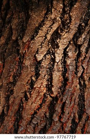 Bark of tree,tree texture - stock photo