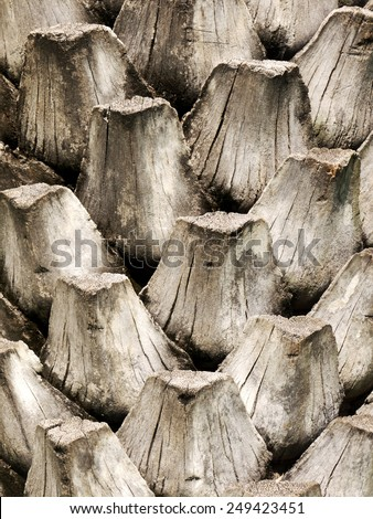 Bark Palms , Upper trunk detail of palm tree background texture - stock photo