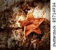 bark star shape christmas symbol on cork background - stock photo