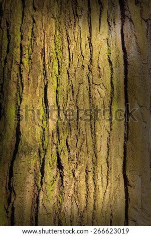 bark tree - stock photo