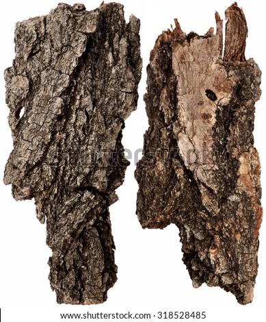 Bark tree isolated on white background - stock photo