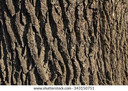 bark tree texture - stock photo