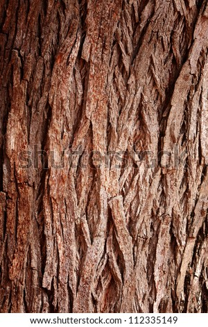 Bark Tree texture full frame in nature - stock photo