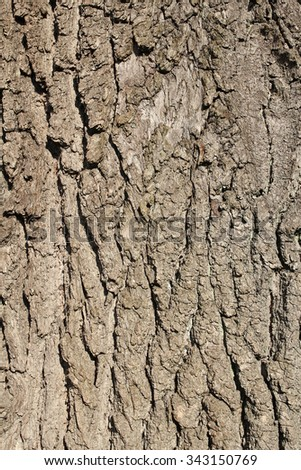 bark tree texture or background - stock photo