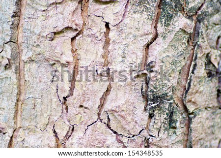 Bark wood texture background.