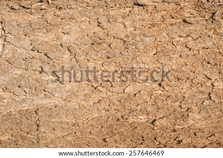 Bark Wood Texture for Background - stock photo