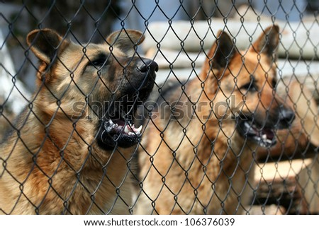 Barking dogs behind the fence - stock photo
