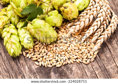Barley and hops on a wooden background. Beer concept - stock photo